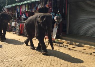 Orphelinat des Eléphants